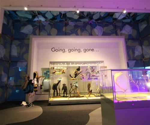 custom wallpaper brings to life the exhibition